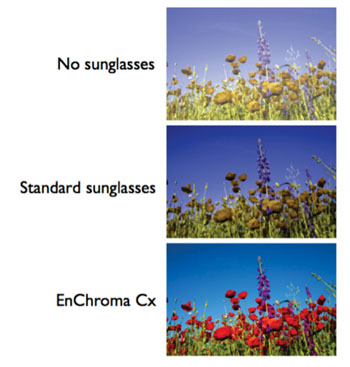 Image: Simulation of color correction using EnChroma Cx (Photo courtesy of EnChroma).